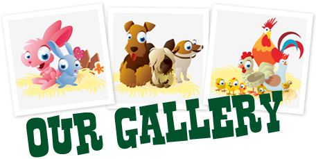 Pet Farm gallery